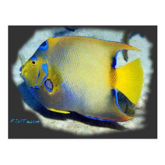 Angelfish de la reina postales