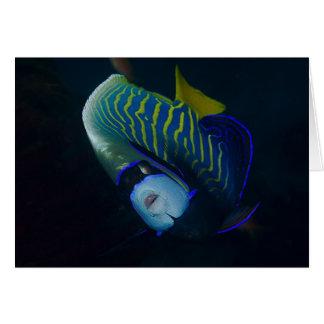 Angelfish del emperador tarjeta de felicitación