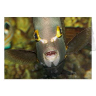 Angelfish francés, con el subtítulo tarjeta de felicitación