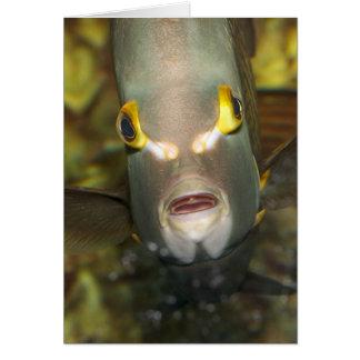 Angelfish francés tarjeta de felicitación