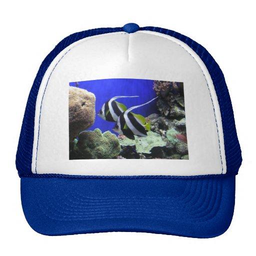 Angelfish Gorros Bordados
