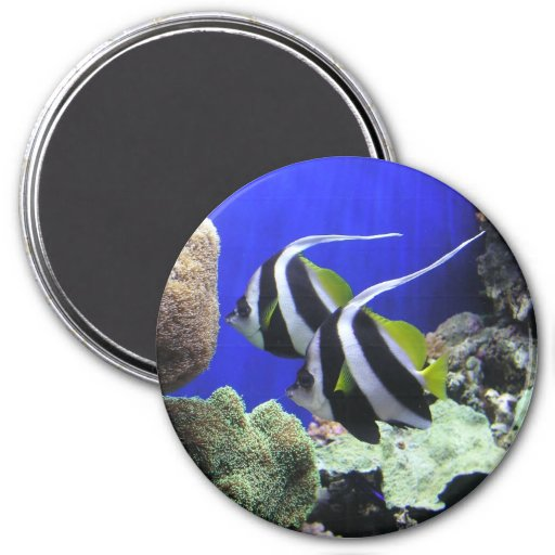 Angelfish Iman Para Frigorífico