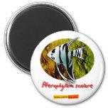 Angelfish Imán Redondo 5 Cm