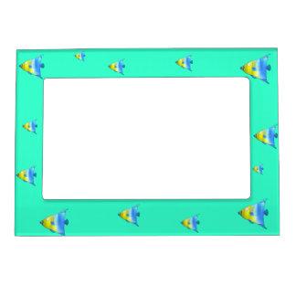 Angelfish Magnetic Frame