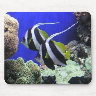 Angelfish Mouse Pads