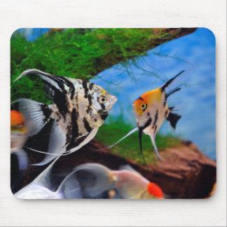 Angelfish Mousepad