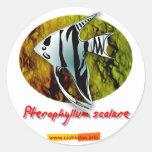 Angelfish Pegatina Redonda