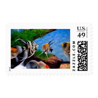 Angelfish Postage Stamp