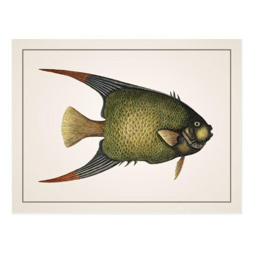 Angelfish Postcard - Style I