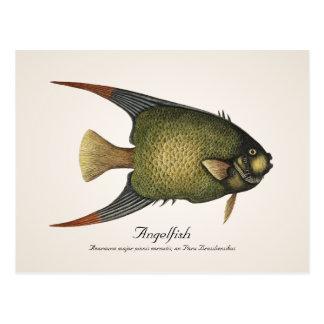 Angelfish Postcard - Style II