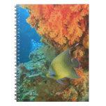 Angelfish que nada cerca del coral suave anaranjad libreta