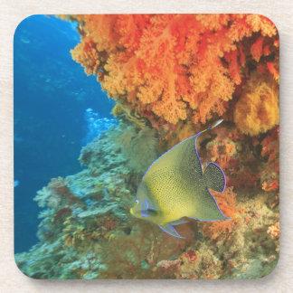 Angelfish que nada cerca del coral suave anaranjad posavasos de bebidas