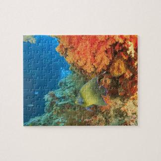 Angelfish que nada cerca del coral suave anaranjad puzzles