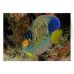 Angelfish real felicitación
