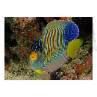 Angelfish real tarjeta de felicitación