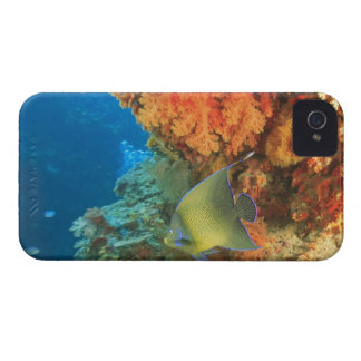 Angelfish swimming near orange soft coral, Bligh Case-Mate iPhone 4 Case