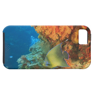 Angelfish swimming near orange soft coral, Bligh iPhone SE/5/5s Case