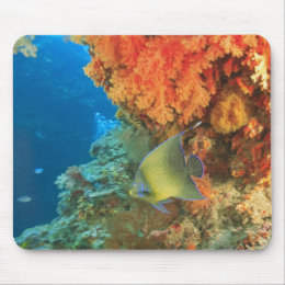 Angelfish swimming near orange soft coral, Bligh Mouse Pad