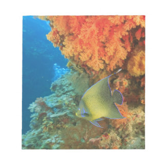 Angelfish swimming near orange soft coral, Bligh Notepad