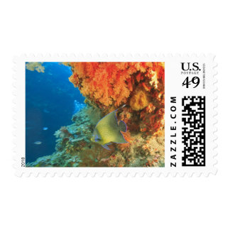 Angelfish swimming near orange soft coral, Bligh Postage Stamp
