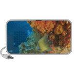 Angelfish swimming near orange soft coral, Bligh Portable Speaker