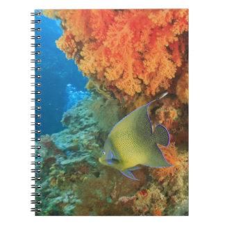 Angelfish swimming near orange soft coral, Bligh Spiral Notebook