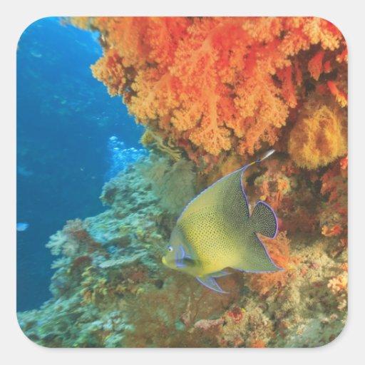 Angelfish swimming near orange soft coral, Bligh Square Sticker
