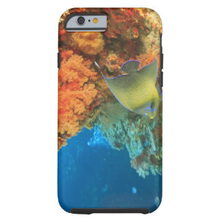 Angelfish swimming near orange soft coral, Bligh Tough iPhone 6 Case