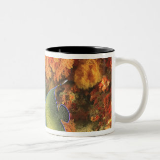 Angelfish swimming near orange soft coral, Bligh Two-Tone Coffee Mug