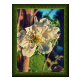 Angelic Plum Blossoms Poster