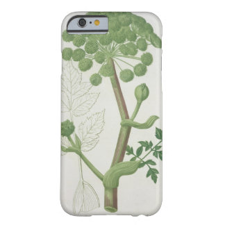Angelica Archangelica from 'Phytographie Medicale' Barely There iPhone 6 Case