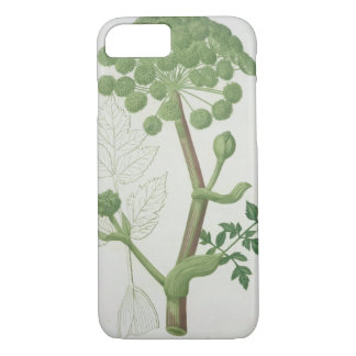 Angelica Archangelica from 'Phytographie Medicale' iPhone 7 Case