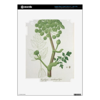 Angelica Archangelica from 'Phytographie Medicale' Decal For iPad 3
