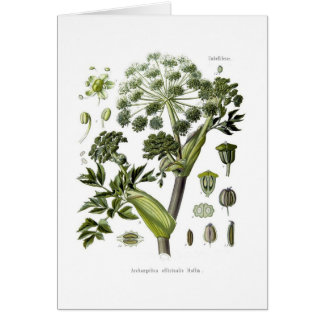 Angelica Greeting Card