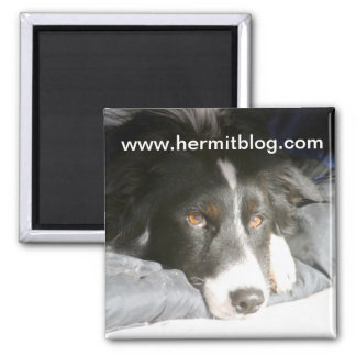 Angelo Border Collie Magnet
