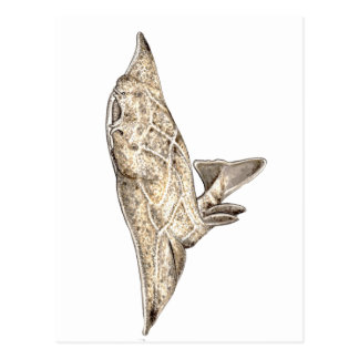 Angelote, shark angel postcard