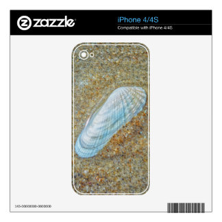 Angelwing Seashell Decals For iPhone 4S