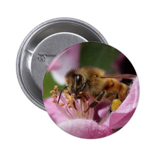 Angery Honey Bee On Pink Crabapple blossom Pinback Button