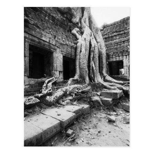 Angkor Cambodia, Ta Prohm Tree Post Cards