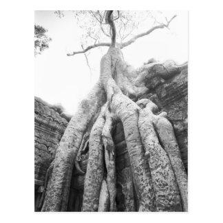 Angkor Cambodia, Tree Ta Prohm Postcard