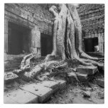 Angkor Camboya, árbol de TA Prohm Azulejo