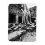 Angkor Camboya, árbol de TA Prohm Iman Flexible
