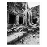 Angkor Camboya, árbol de TA Prohm Postales