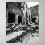Angkor Camboya, árbol de TA Prohm Posters