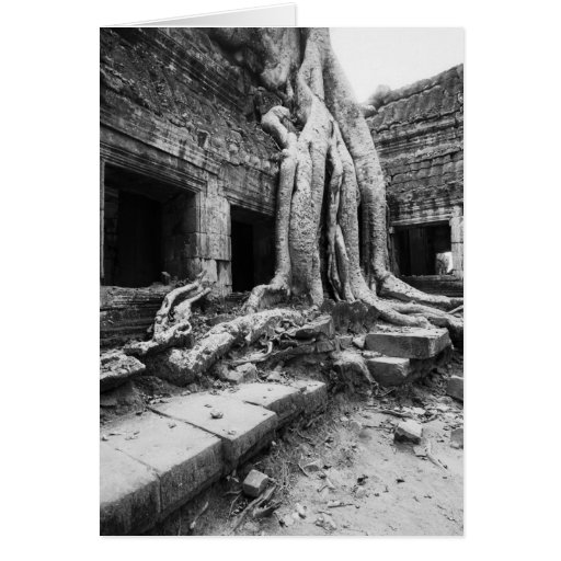 Angkor Camboya, árbol de TA Prohm Tarjetas