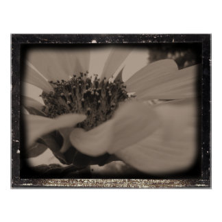 Angled Sunflower Diatrope Style Print