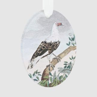 Angola Vulture Bird Illustration Ornament