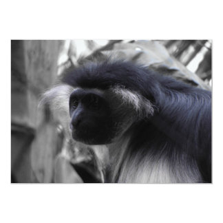 Angolan Black and White Colobus Monkey Card