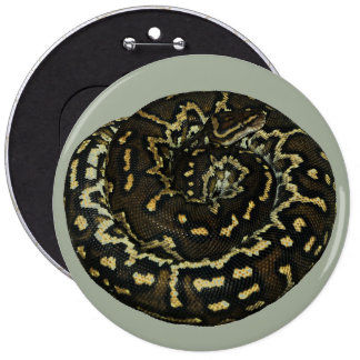 Angolan python for exotic pet lovers button