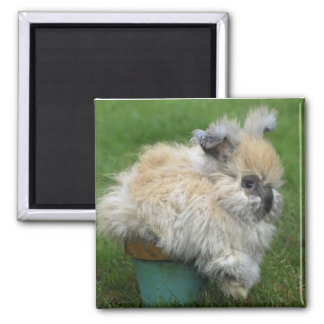 Angora Bunny 2 Inch Square Magnet